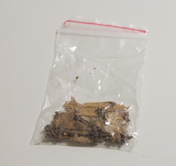 Семена клёна бонсай aliexpress