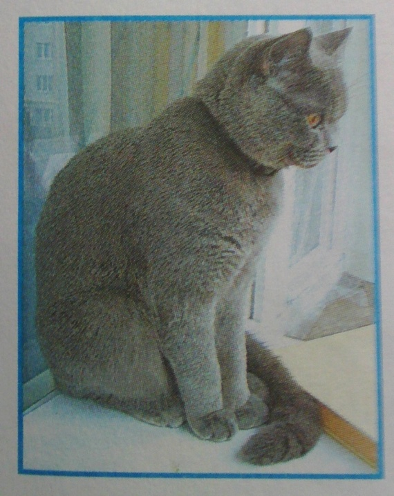 кошка из окружающего мира Плешаков