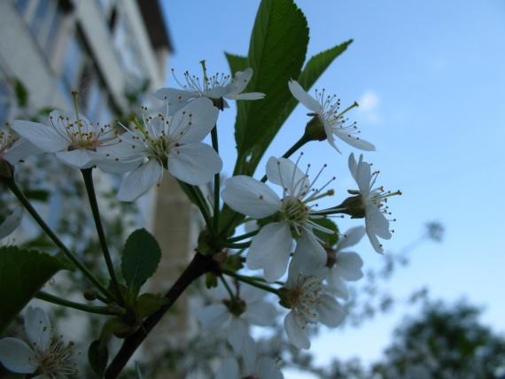 красота растений